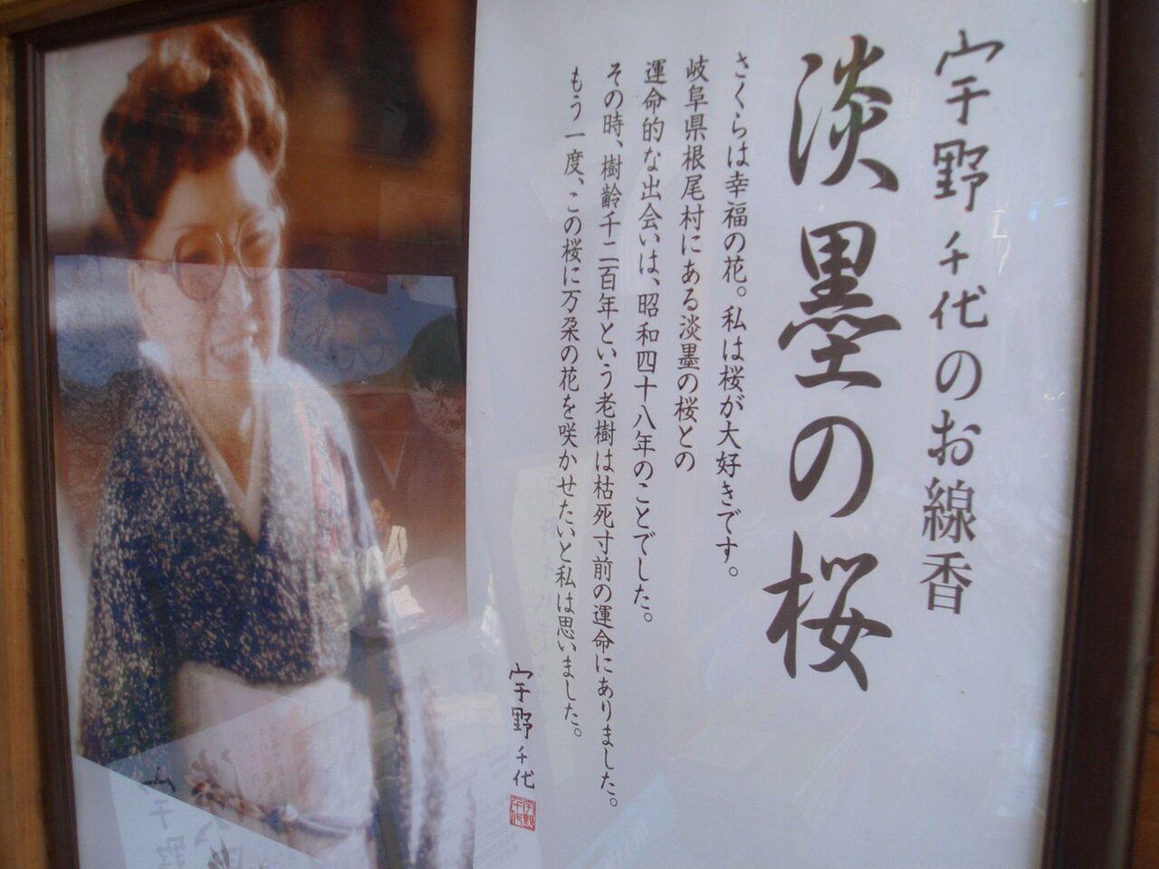 作家宇野千代さんの生前の桜にたいする言葉と思い