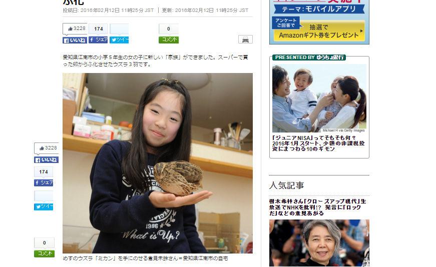 スーパーで買った卵からウズラを孵化させた、江南市の小学5年生