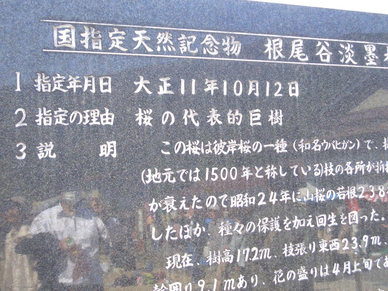国指定天然記念物の説明板